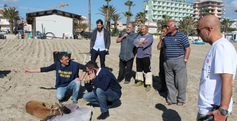 Il capriolo trovato in mare (foto di Francesco Libbi)