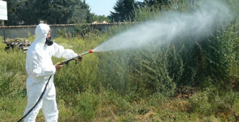 Chikungunya: Oms, non esclusi nuovi casi