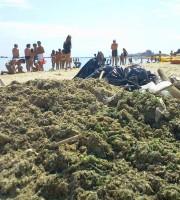 Detriti in spiaggia