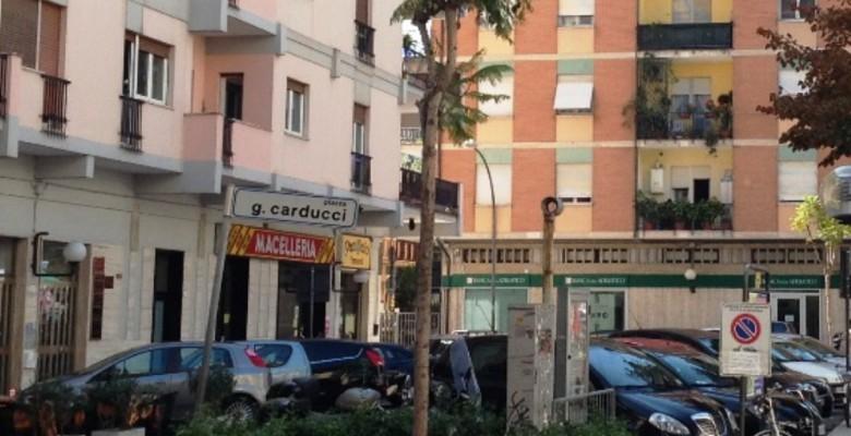 Jacaranda in Piazza Carducci