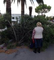 L'albero caduto (foto di Emilio Speca)
