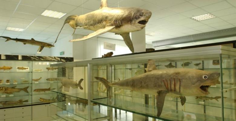 Museo del Mare di San Benedetto