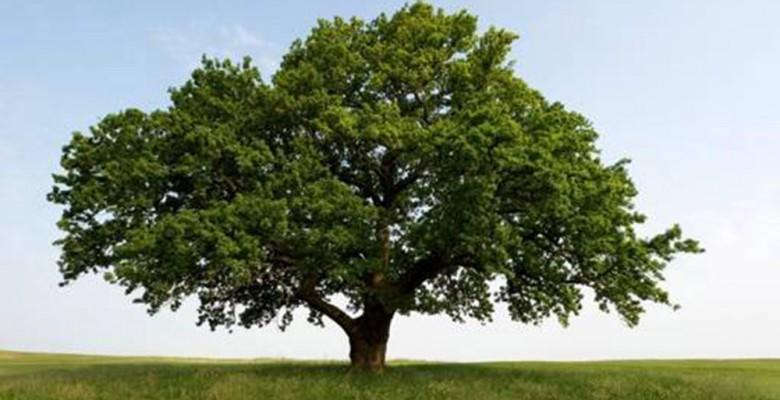 festa degli alberi