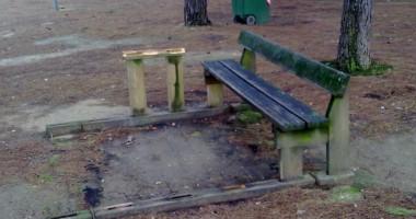 Atti vandalici nella pineta di via Appio Claudio