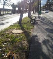 Il lungomare di Martinsicuro dove sono state abbattute numerose palme infette