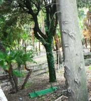 Le condizioni della villa-parco