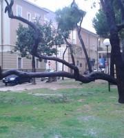 5 marzo, cadono alberi alla pineta Ricciotti di Grottammare