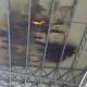 Incendio pannelli stadio, 6 marzo