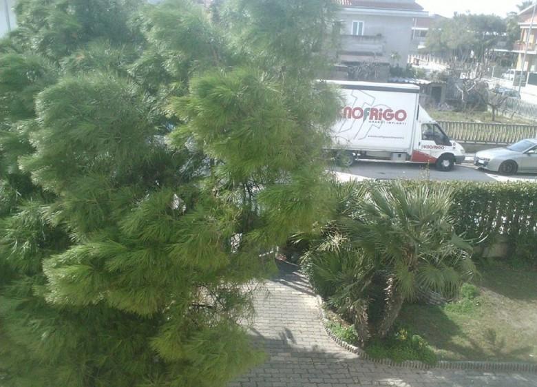 Pino caduto in via Altforville, Porto d'Ascoli, 6 marzo