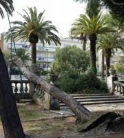 Pino caduto nei pressi del Maggioni (foto tratte dalla pagina Fb Circolo Tennis Maggioni)