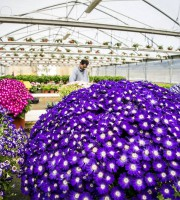 Fiori coltivati nelle serre della Cooperativa Sociale Primavera