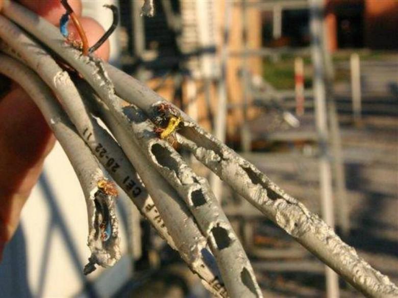 Cavi elettrici (foto di repertorio tratta dal sito pisatoday.it)