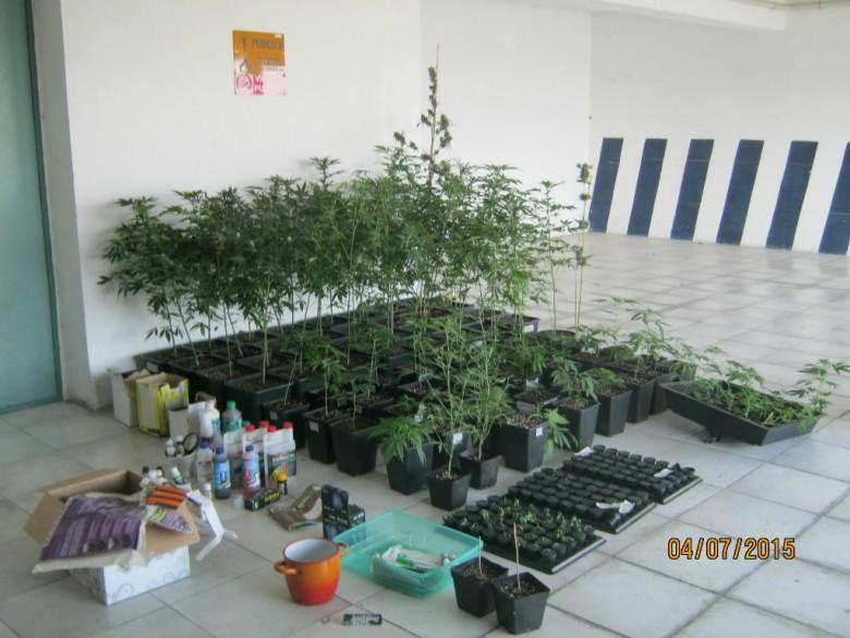 Piantine di marijuana, (foto dei Carabinieri di Fermo)