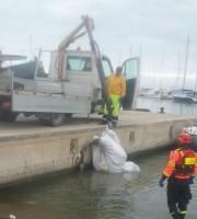 Recuperata la carcassa del delfino, 29 settembre (foto Capitaneria di Porto)