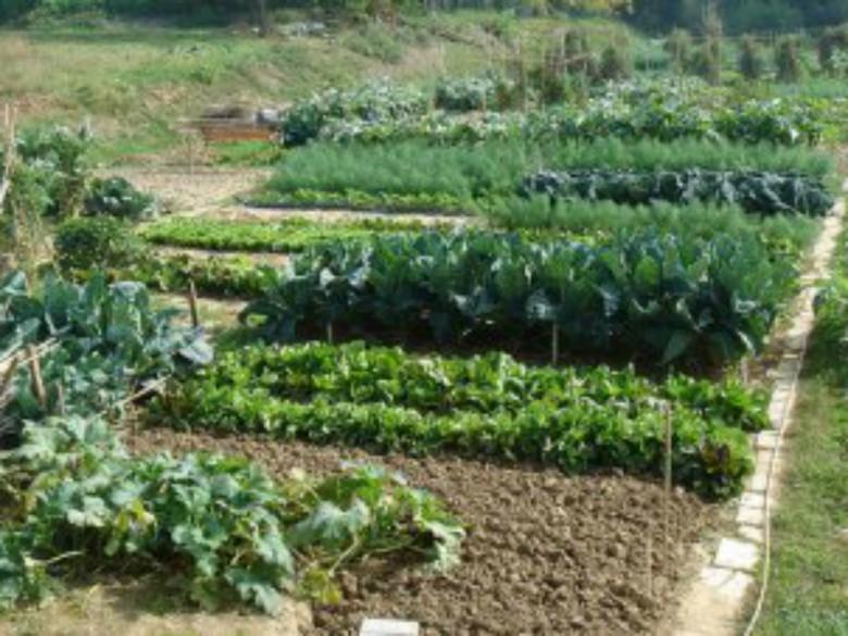 Come curare l 39 orto di casa mia ecco un corso riviera oggi for Come ottenere progetti di casa mia
