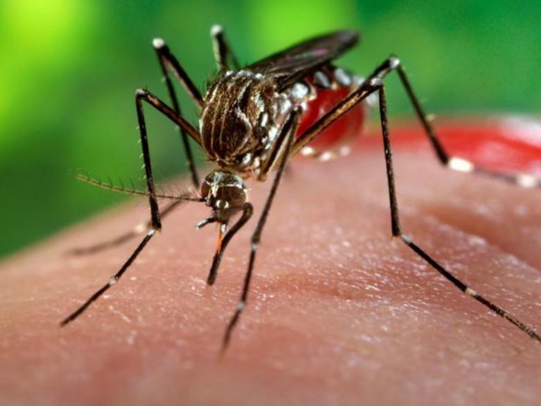 Virus Zika (foto tratta dal sito iltempo.it)