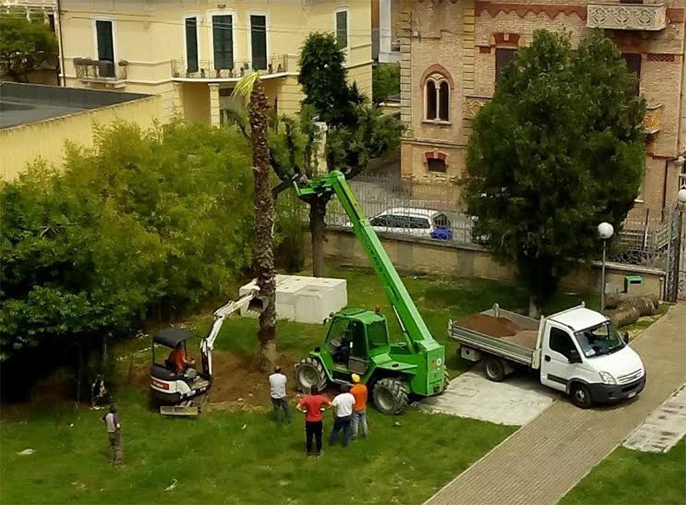 Addio vecchie palme ripiantate le washingtonie - Lavori in giardino ...
