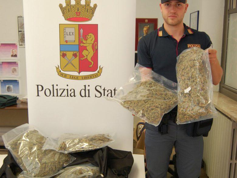 Marijuana sequestrata in Riviera (foto Questura di Ascoli)