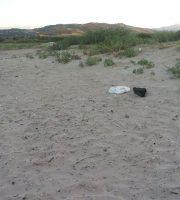 Tratto di spiaggia alla Riserva Sentina