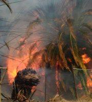 Incendio in viale dello Sport, 13 agosto