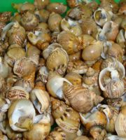 Lumachini di mare (foto tratta da bonapesca.it)