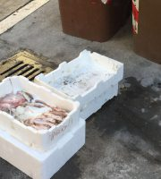 U a foto del pesce venduto abusivamente in via Calatafimi