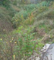strada-provinciale-verso-san-savino-crollata-1