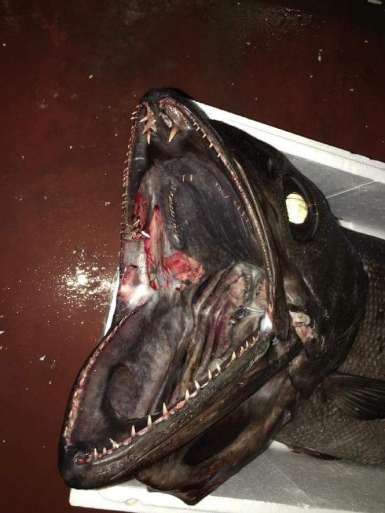 Pesca speciale al largo di grottammare preso un pesce for Un pesce allevato in acque stagnanti