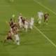 Reggiana-Samb, Scappini in fuorigioco nella discussa azione del 2-1