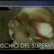 Super Virus, Tg Leonardo del 16 novembre 2015