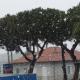 Martinsicuro, neve, 25 marzo 2020