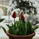 Neve a Venarotta, 25 marzo 2020