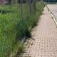 Zona Agraria, erba alta ai lati del marciapiede
