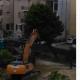 Ex Scuola Curzi, abbattuto anche l'ultimo albero
