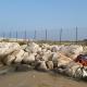 La cassa di colmata al porto di San Benedetto, novembre 2020 (2)